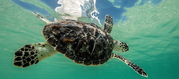 burj-al-arab-turtle-rehabilitation-01-hero