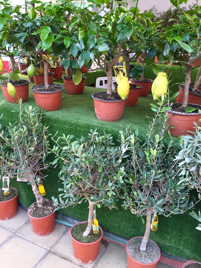 Shopping at Global Village: Lemon Trees in Italy