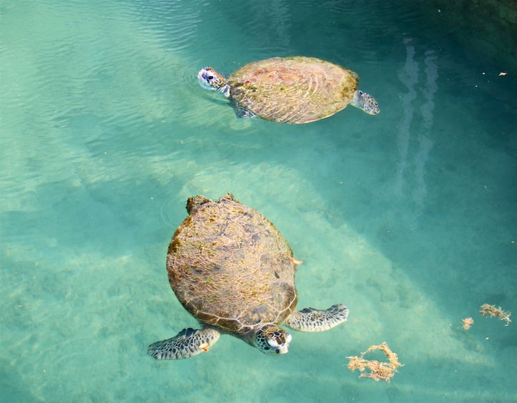 kids-activities-turtle-feeding-jumeirah-al-naseem
